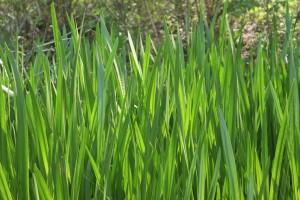 Grass Loveland